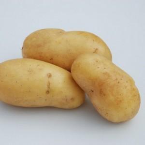 Vastkokende Charlotte aardappel