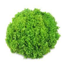 Groene krulsla